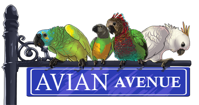 Avian Avenue Parrot Forum